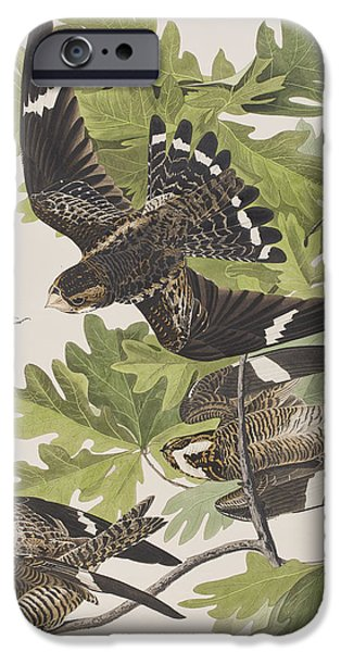 Animals Drawings iPhone Cases - Night Hawk iPhone Case by John James Audubon