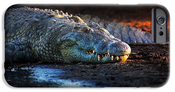 Ground iPhone Cases - Nile crocodile on riverbank-1 iPhone Case by Johan Swanepoel