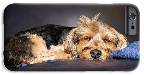 Cute Puppy iPhone Cases - Nite Nite iPhone Case by Maria Coulson