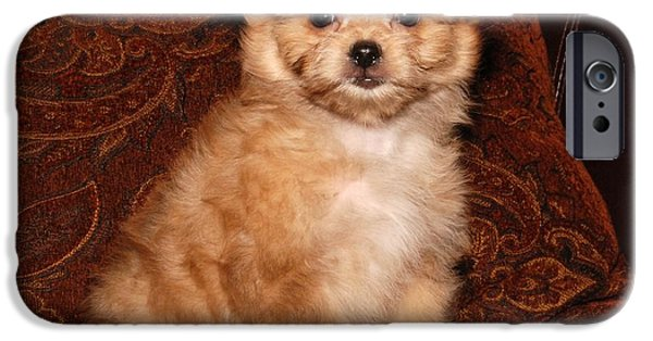 Dog Photograph Canvas iPhone Cases - Noah iPhone Case by Angie Tirado
