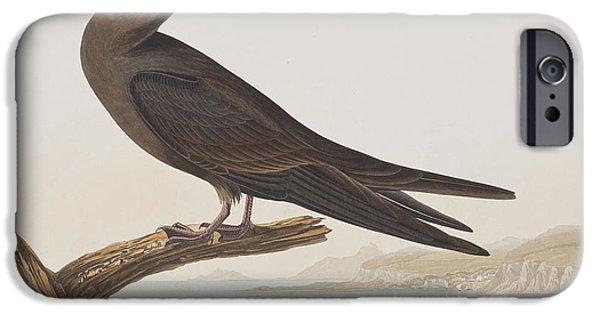 Tern iPhone Cases - Noddy Tern iPhone Case by John James Audubon