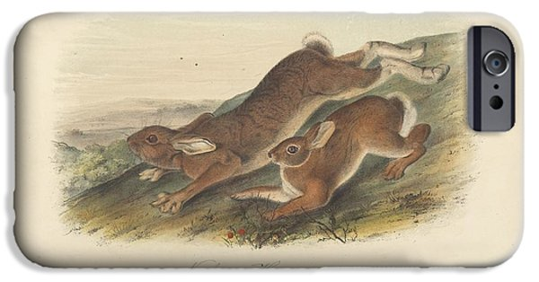 Animals iPhone Cases - Northern Hare iPhone Case by John James Audubon