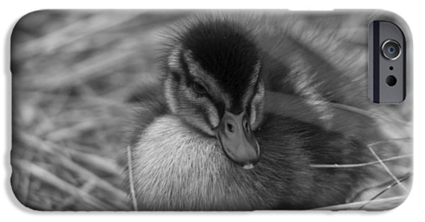 Baby Bird iPhone Cases - Not so Ugly Duckling bw iPhone Case by Chris Whittle