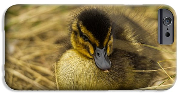 Duckling Photography iPhone Cases - Not so Ugly Duckling iPhone Case by Chris Whittle