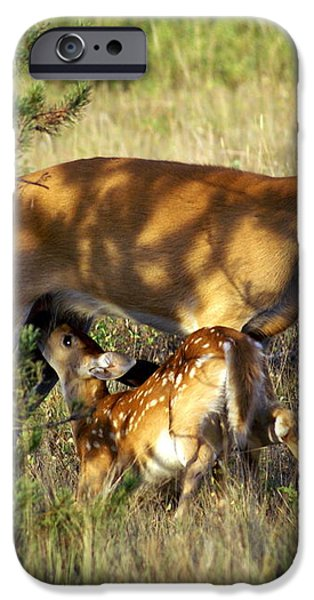 Nursing Fawn iPhone Case by Marty Koch