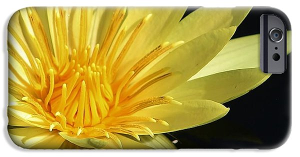 Flora iPhone Cases - Nymphaea St louis Gold Watercolor Lily iPhone Case by Bruce Bley