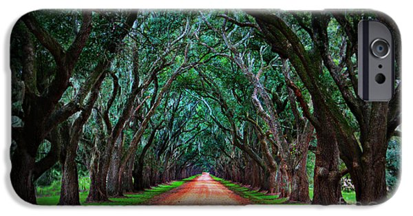 Oak Alley Plantation iPhone Cases - Oak Alley Road iPhone Case by Perry Webster