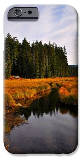 Oak Creek iPhone Cases - Oak Grove iPhone Case by Noah Cole