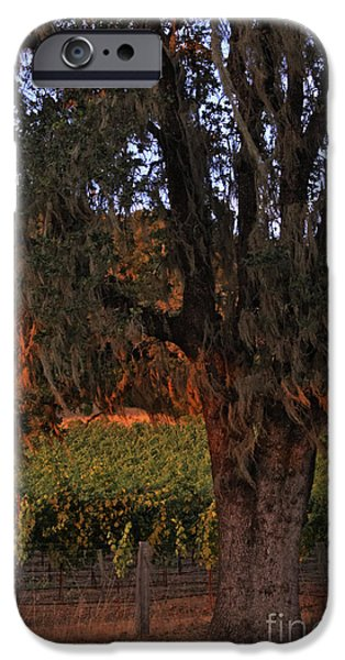 Oak Tree and Vineyards in Knight's Valley iPhone Case by Charlene Mitchell