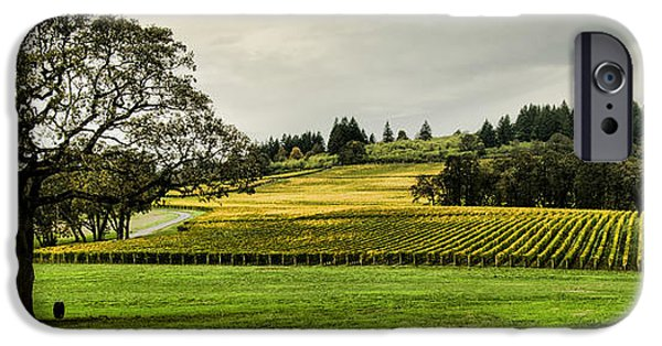 Agricultural iPhone Cases - Oak Tree at the Vineyard iPhone Case by Don Schwartz