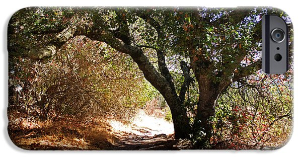 Poison iPhone Cases - Oak Tree on Sylvan Trail iPhone Case by Laura Iverson