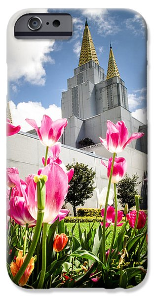 Oakland Pink Tulips iPhone Case by La Rae  Roberts