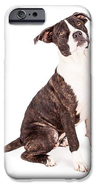 Mutt iPhone Cases - Obedient Terrier Mixed Breed Dog iPhone Case by Susan  Schmitz