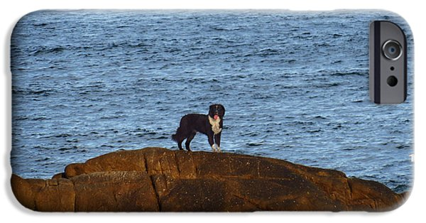 Dogs Tapestries - Textiles iPhone Cases - Ocean Dog iPhone Case by James Hennis