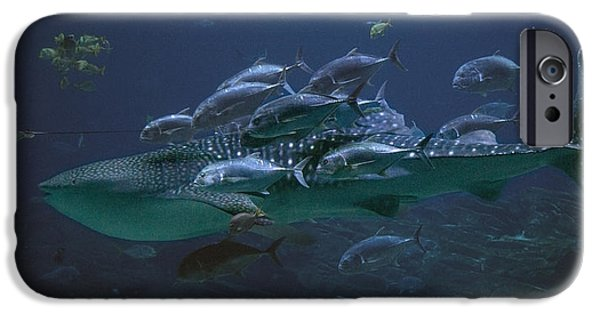 Cutler iPhone Cases - Ocean Treasures iPhone Case by Betsy C  Knapp