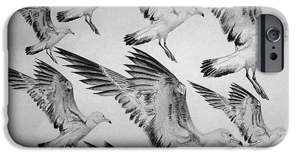 Seagull Drawings iPhone Cases - Octogull iPhone Case by Peter Paul Lividini