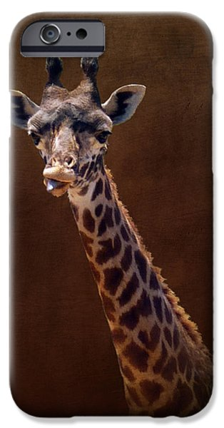 California Tourist Spots iPhone Cases - Old Funny Face Giraffe iPhone Case by Carla Parris