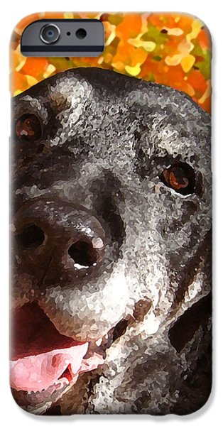 Old Labrador iPhone Case by Amy Vangsgard