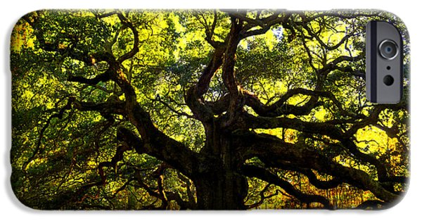 Texture iPhone Cases - Old old Angel Oak in Charleston iPhone Case by Susanne Van Hulst
