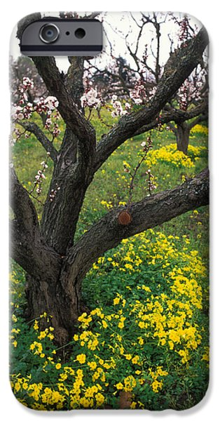Tree Art Print iPhone Cases - Old Orchard in Bloom iPhone Case by Kathy Yates