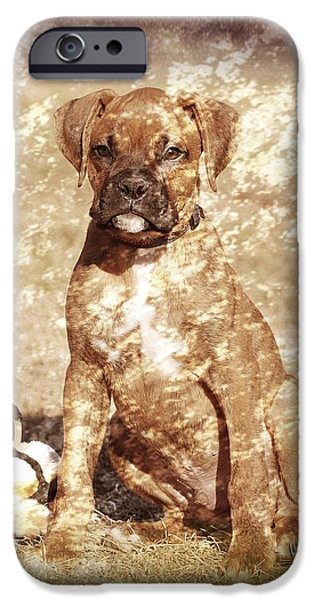 Canine Greeting Cards Digital Art iPhone Cases - Old Time Boxer Portrait iPhone Case by Angie Tirado