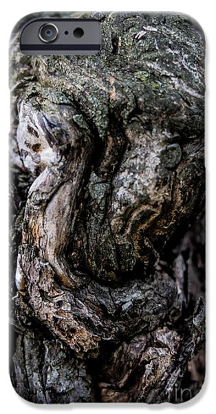 Detail Pyrography iPhone Cases - Old Tree Details iPhone Case by Olga Photography