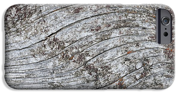 Lichens iPhone Cases - Old weathered wood abstract iPhone Case by Elena Elisseeva