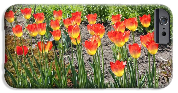 Photographs With Red. iPhone Cases - Old Westbury Garden Tulips iPhone Case by John Telfer