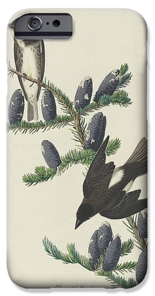 Flycatcher iPhone Cases - Olive-Sided Flycatcher iPhone Case by John James Audubon