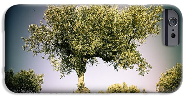 Agricultural iPhone Cases - Olive tree 3 iPhone Case by Marc SOLERMARCE