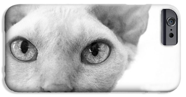 iPhone Cases - Oliver in Black and White iPhone Case by Glennis Siverson