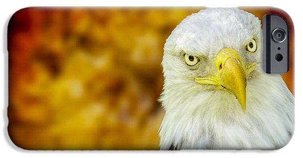 Freedom iPhone Cases - On Fire the American Bald Eagle iPhone Case by LeeAnn McLaneGoetz McLaneGoetzStudioLLCcom