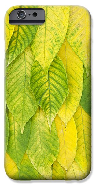 Autumn iPhone Cases - On The Turn iPhone Case by Tim Gainey