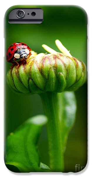 Daisy Bud iPhone Cases - On Top of My World iPhone Case by Sharon  Talson