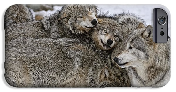 Wolf Pics Mixed Media iPhone Cases - One big happy family iPhone Case by Michael Cummings