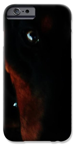 Puppies iPhone Cases - One eye of Samson iPhone Case by Jennifer McGuire
