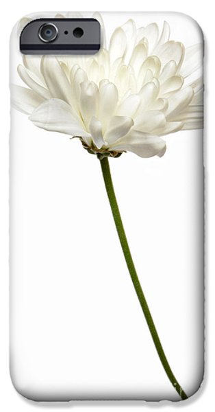 Fine Art Photo iPhone Cases - One White One iPhone Case by Dan Holm