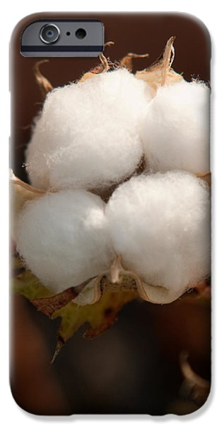 Arkansas iPhone Cases - Open Cotton Boll iPhone Case by Douglas Barnett