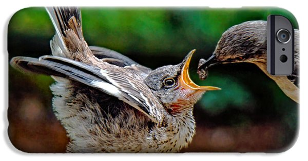 Baby Bird iPhone Cases - Open Wide iPhone Case by Sue Melvin