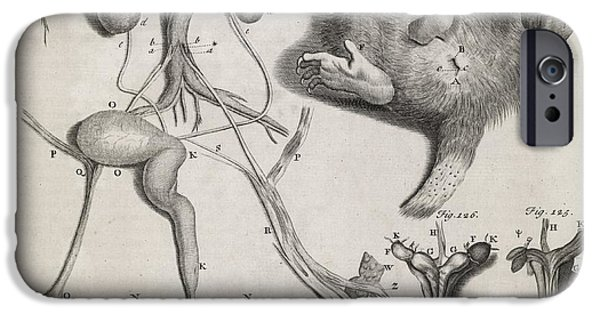 Philosophical iPhone Cases - Opposum Anatomy, 18th Century iPhone Case by Middle Temple Library