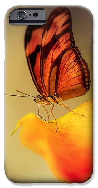 Floral Photographs iPhone Cases - Orange and black butterfly sitting on the yellow petal iPhone Case by Jaroslaw Blaminsky