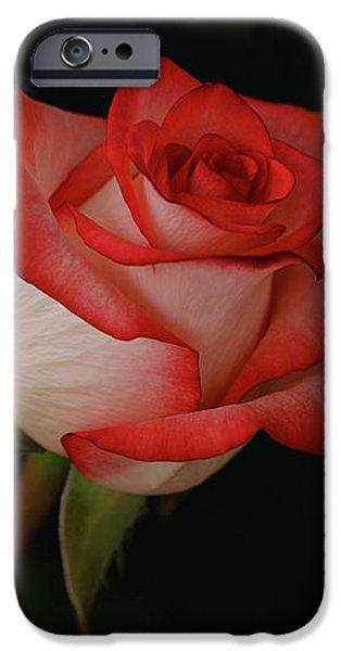 Orange and White Rose iPhone Case by Sandy Keeton