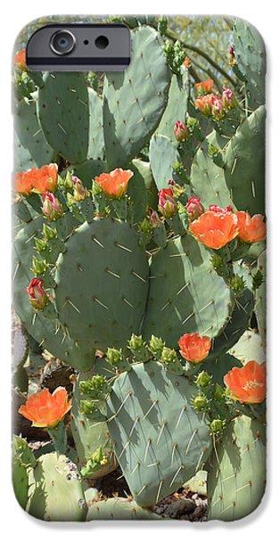 Cactus Southwest Cactus Flower Orange Wildflowers Nature Arizona iPhone Cases - Orange Blossom Cactus  iPhone Case by Aimee L Maher Photography and Art