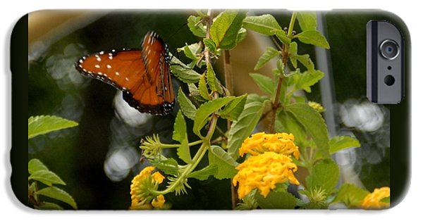 Bugs Pyrography iPhone Cases - Orange Butrfly with Yellow Plant iPhone Case by Donna Stiffler