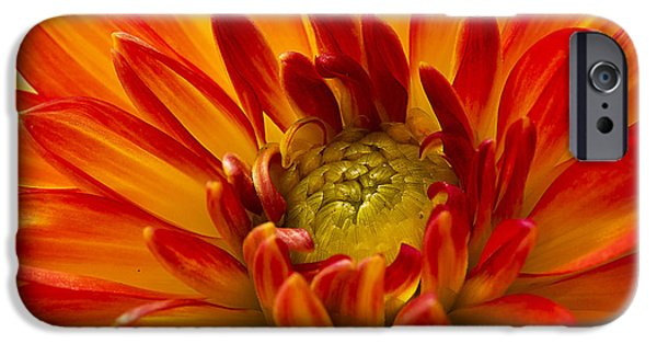 Nature Abstract iPhone Cases - Orange Dahlia iPhone Case by Morgan Wright