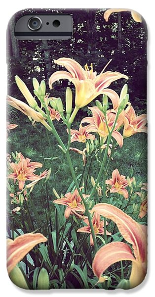 Flower Bombs iPhone Cases - Orange Day Lilies and Dog iPhone Case by Lynn-Marie Gildersleeve