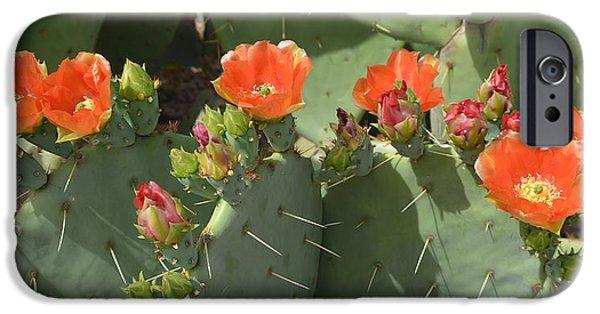 Cactus Southwest Cactus Flower Orange Wildflowers Nature Arizona iPhone Cases - Orange Dream Cactus iPhone Case by Aimee L Maher Photography and Art