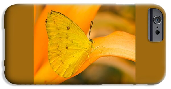 Small iPhone Cases - Orange Emigrant Butterfly iPhone Case by Kimberly Kotzian