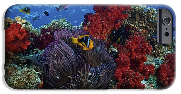 Undersea Photography iPhone Cases - Orange-finned Clownfish And Soft Corals iPhone Case by Terry Moore