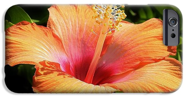 Chicago iPhone Cases - Orange Hibiscus iPhone Case by Bruce Bley